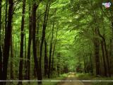 Landscaps